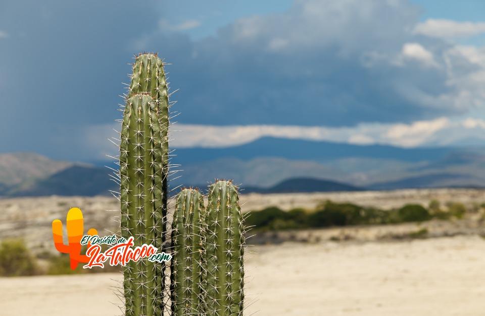 Desierto de la Tataacoa