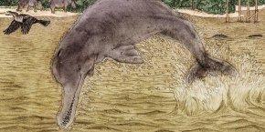 En La Tatacoa hallan fósil de un Delfín de hace 13 millones de años
