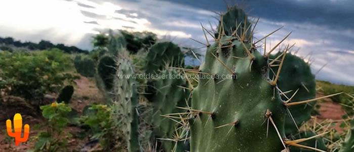 Cactus magicos